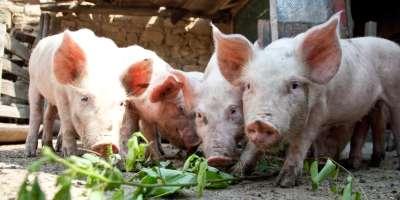 zwierzęta gospodarskie ubezpieczenia rolne